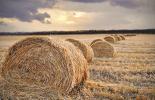 agrarjog_index