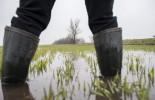 Belvíz - Békésben a szántóföldek több mint harminc száza