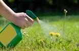 herbicides_lawn