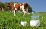 mlijeko-i-krava