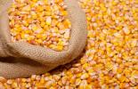 corn10