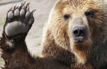 Brown-bear-female-and-its-children-play-with-a-ball-in-Kamchatka-Peninsula-Russia-8012761-e1443368461570